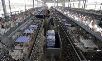Israeli poultry infected with bird flu virus